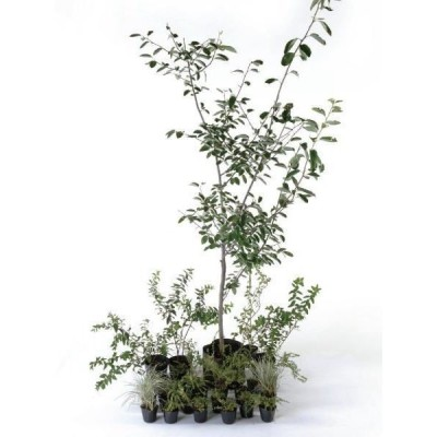 ナチュラル 日なた セットアップガーデン 植木 苗 庭木 セット商品