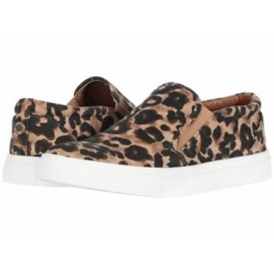 Steve Madden スティーブマデン レディース 女性用 シューズ 靴 スニーカー 運動靴 Amplify Sneaker Leopard【送料無料】
