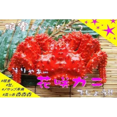 A-59004 【北海道根室産】花咲ガニ400g以上×1尾