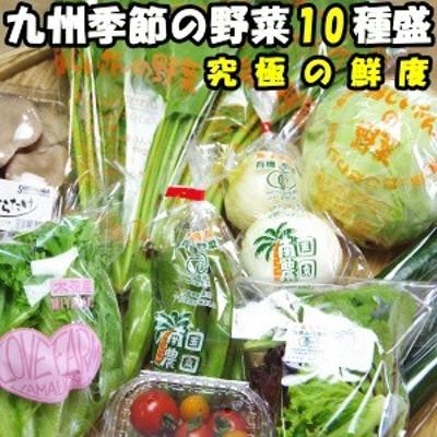 究極の鮮度でお届け!九州産顔や名前が見えるこだわり野菜セット!季節の10種盛り 送料無料 九州 野菜セット 送料無料 野菜 詰合せ 野菜