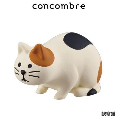 concombre コンコンブル 観察猫