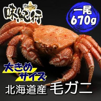 毛ガニ 北海道産 約670g 1尾入り ボイル済 ギフト カニ かに 蟹