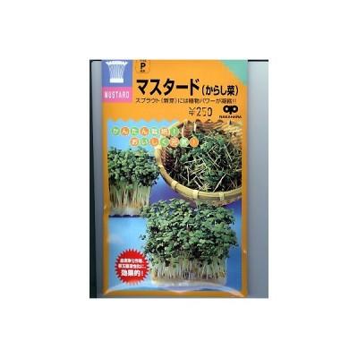 スプラウト種 マスタード(からし菜)<スプラウト用のマスタード種子です。>