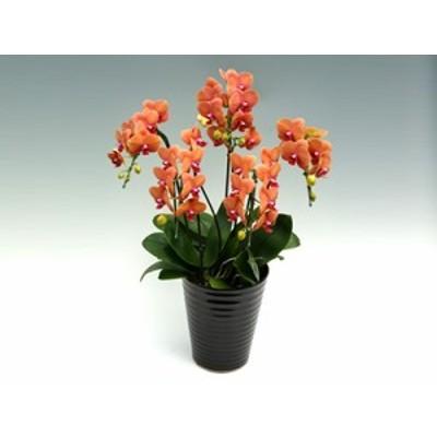 サーフソング(5本立) フラワーギフト 鉢植え 誕生日 記念日 プレゼント 開店祝い 昇進祝い 移転祝い 個性的な胡蝶蘭 オレンジ系の深い