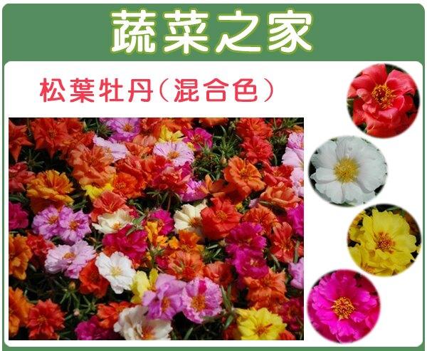 【蔬菜之家】H37.松葉牡丹(混合色,匍匐性)種子(共有兩種包裝規格)