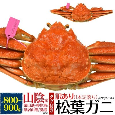 訳あり 茹で松葉ガニ 約800〜900g ズワイガニ 1本足折れ アウトレット ボイル済 クール発送 獲れたて 限定販売 カニ 蟹 かに