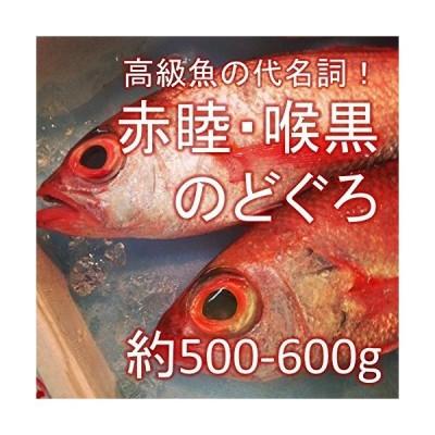 のどぐろ 喉黒 赤むつ 大サイズ 生 鮮魚(築地直送)約500-600g/1尾 日本海産他(鳥取・山口・島根他)アカムツ生のどぐろ500g-