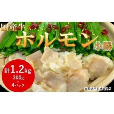 国産牛 シロ ホルモン 小腸(鍋用)1.2kg【配送不可:離島】