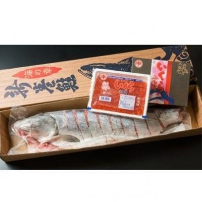 オホーツク秋鮭切身姿造りと魚卵セット