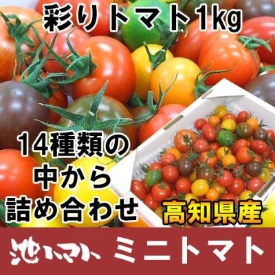 彩りトマト 約1kg