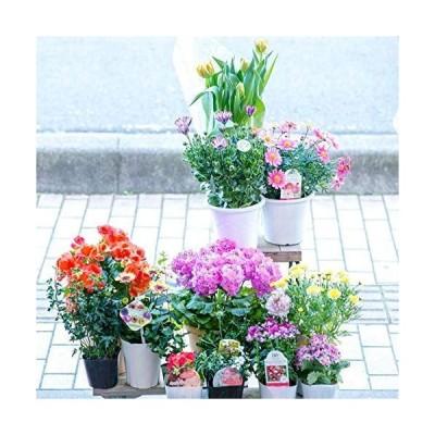 【マケプレお急ぎ便対応】季節の鉢物福袋セット 何が入っているかは届いてからのお楽しみ! ガーデニングや寄せ植えに最適 鉢花 鉢植え 苗物 フ