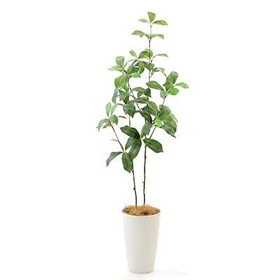 即納/新品/送料無料 プレミアム光触媒 フェイクグリーン 造花 人工 観葉植物 観葉樹 銀担持 酸化
