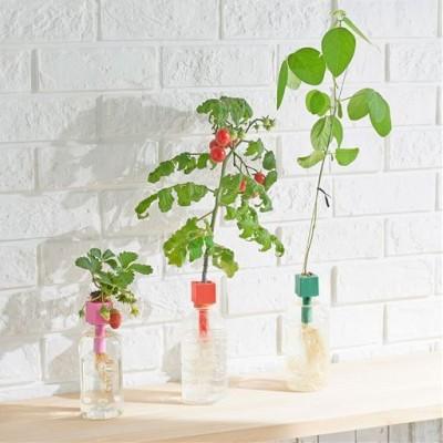 ペットボトル水耕栽培用種子/3種セット(プチトマト・四季なりイチゴ・枝豆)/A(3種セット)