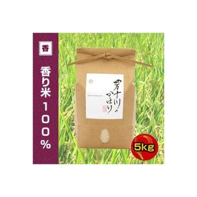 令和2年度産 香り米(神の香〜カミノカ)100% 5kg 四万十川のかほり (品種名:汢ノ川1号) 新品種 ヌタノカワ
