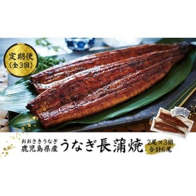 【定期便】おおさきうなぎ鹿児島県産うなぎ長蒲焼2尾(全3回)合計6尾