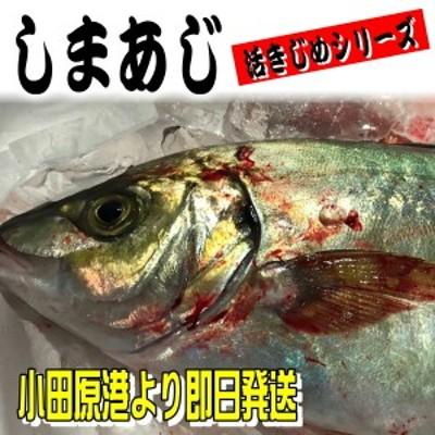 しまあじ 活き締め 約1.2kg 刺身用 生食用 【 小田原港 より 即日発送 / うまいもの市場・活〆シリーズ 】 鮮度重視、旨味が違います