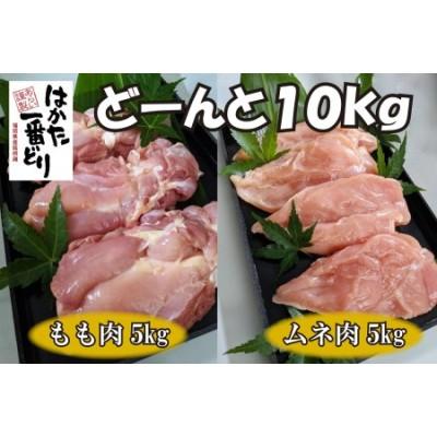BD-033 どーんと10kg!福岡名物【はかた一番どり】もも肉とムネ肉