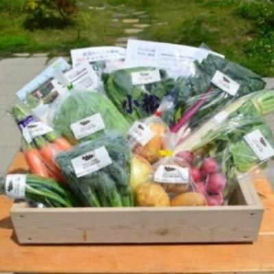 採れたて野菜を箱いっぱい詰め込んで♪岩沼みんなの家の「みんなの直売!野菜」セット詰め合わせ