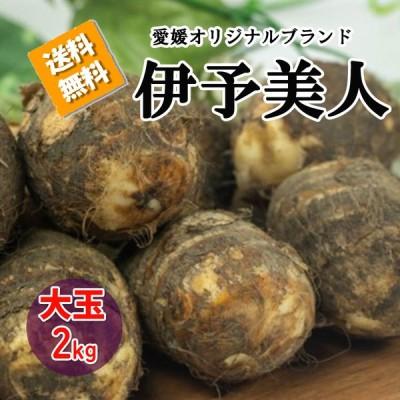 伊予美人 里芋 愛媛県産 大玉 サトイモ 約2kg 送料無料 箱買い 野菜