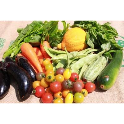 無農薬旬 野菜Lセット ギフト 自然食品 gift