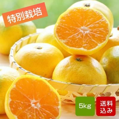 みかん 極早生みかん 5kg 特別栽培 ご家庭用 サイズ混合 熊本県産
