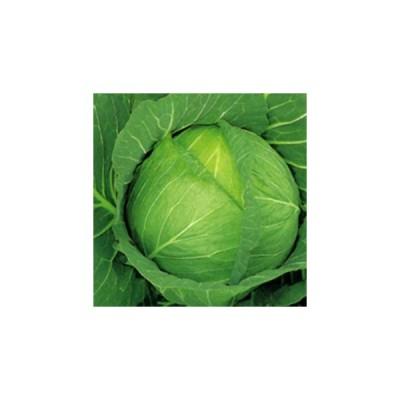 キャベツの種 みくに 小袋(200粒) ( 野菜の種 )