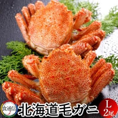 毛がに 特大(2尾入)1kg ボイル かに 北海道産 毛蟹 姿