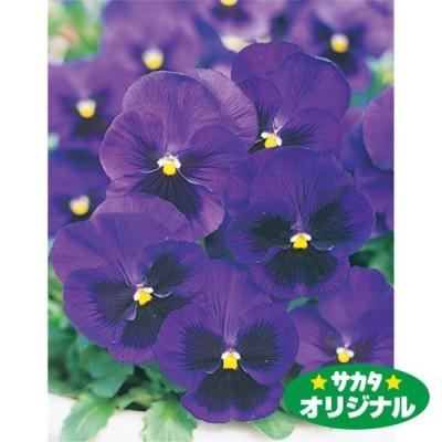 花の種(営利用)パンジー 三色スミレ プロント ブルー 1000粒 プライマックス種子 サカタのタネ 種苗(メール便発送)