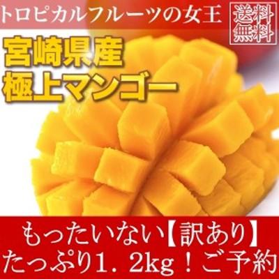 送料無料  訳あり 宮崎県産 完熟アップルマンゴー 宮崎マンゴー 約1.2kg ご予約