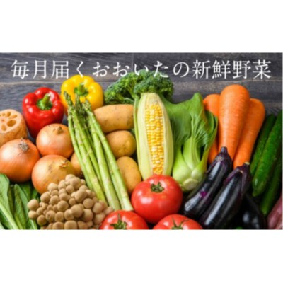 4月から毎月お届け!おおいたの旬野菜定期便/計12回発送