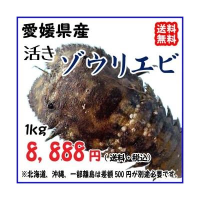 愛媛 天然 ( ゾウリエビ ) 5-10尾 0.8-1kg 幻の海老 浜から直送 送料無料 宇和海の幸問屋