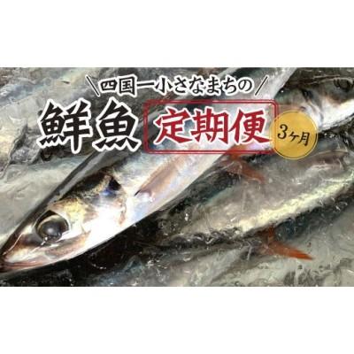【四国一小さなまちの鮮魚】~海の幸~  旬の朝どれ鮮魚セット カネアリ水産の鮮魚定期便3ヶ月