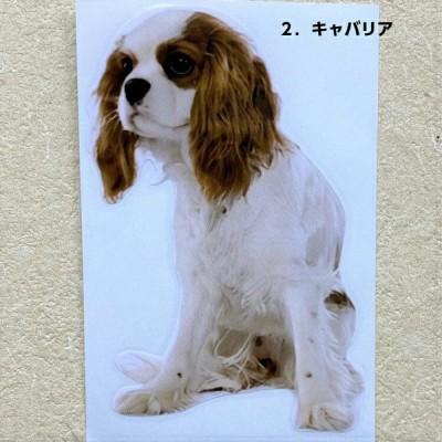 ステッカー キャバリア 2枚セット 3D リアル 犬種別 外張りステッカー 犬 いぬ イヌ ドッグ dog 車 car カーステッカー オーナーグッズ 雑貨 犬プリント 耐光性