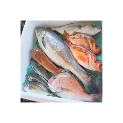 越前町 ふるさと納税 【越前港直送】朝獲れお魚詰め合わせ    6種類