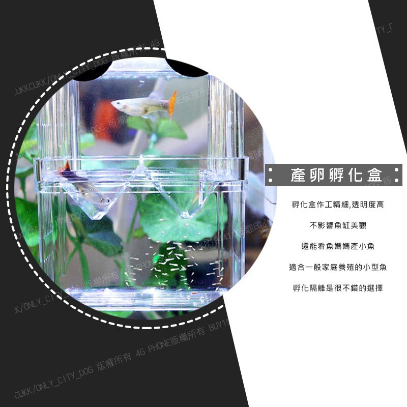 【歐比康】 小號產卵孵化盒 懸浮式 自浮式隔離盒 繁殖箱 隔離箱 產子盒 孵化箱 產卵盒 孔雀魚 幼魚 鬥魚