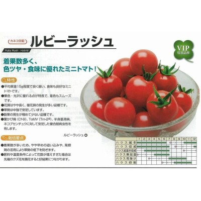【ミニトマト】ルビーラッシュ〔カネコ交配〕/小袋