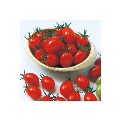 ナカハラのたね トマト ジュエルトマト 小袋